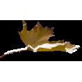 sandra24 - Leaf - Plants