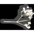 sandra24 - Plants White - Plants