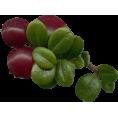 sandra24 - Leafs - 植物