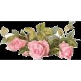 Tamara Z - ruže - Plants
