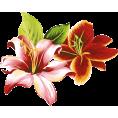 sanja blažević - Flower - Plants
