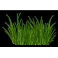 sanja blažević - Grass - Plants