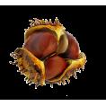 sanja blažević - Chestnut - Plants