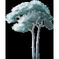 sanja blažević - Tree - Plants