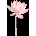 sanja blažević - Plants Pink - Plants