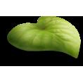 sanja blažević - Leaf - Plants