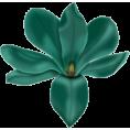 sanja blažević - Cvijet - Plants
