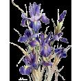 sanja blažević - cvijeće - Plants