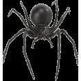 sanja blažević - spider - Animals