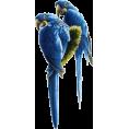 sanja blažević - Bird - Plants