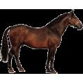 sanja blažević - Horse - Animals