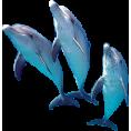 sanja blažević - Dolphin - Animals