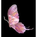sanja blažević - Buterfly - Animals