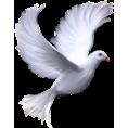 sanja blažević - Pigeon - Animals