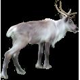 sanja blažević - Deer - Animals