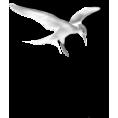 sanja blažević - Seagull - Animals