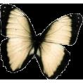 sanja blažević - butterfly - Animals