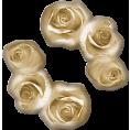 trendme.net - Roses - Plants