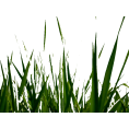 trendme.net - grass - Illustrations