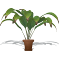 webmaster(s) @trendMe - Potted Indoor Palm - Plants