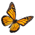 Scapin - Butterfly - Animals