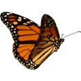 Scapin - Butterfly - Animais