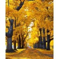 Bev Martin - Fall Background - Ozadje