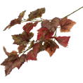 ValeriaM - Grapevine Leaves - Biljke