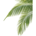 asia12 - Palm leaf (asia12) - Plants