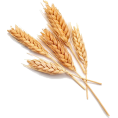 Scapin - Wheat - Nature