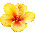 IncognitO - Yellow_Exotic_Flower_PNG_Clipart_Picture - Plants