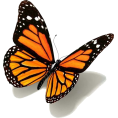 cilita  - butterfly - Animals