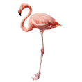 Pam  - flamingo - Animals