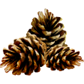 Pam  - pinecones - Items