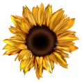 Pam  - sunflower - Items